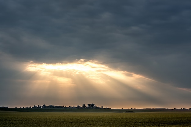 Während des sonnenaufgangs dringen lichtstrahlen durch dicke wolken. feld und dramatischer dunkler himmel während des sonnenuntergangs