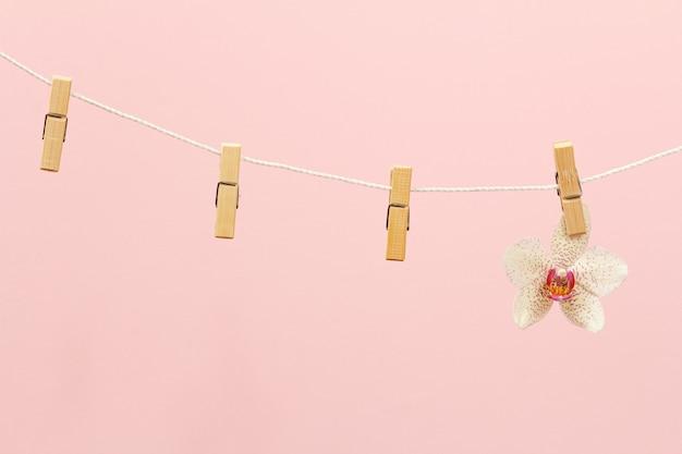 Wäscheklammern aus holz und eine orchideenblüte an einem seil auf rosa hintergrund.