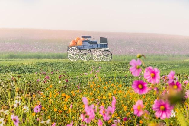 Wagen auf grünem gras bei sonnenaufgang
