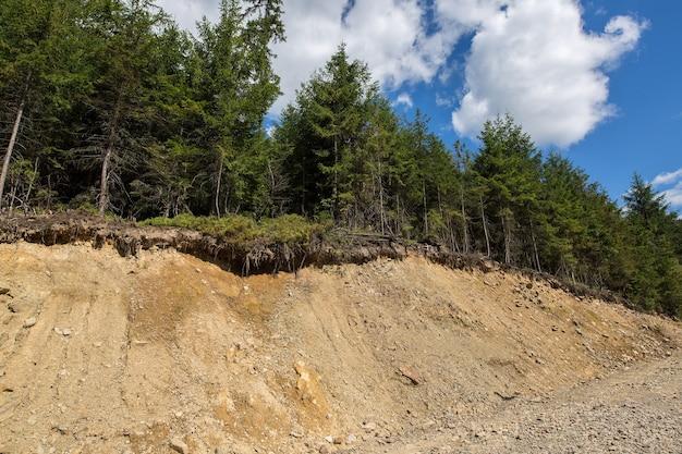 Wald am rande des eingestürzten hügels