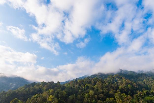 Wald auf berg mit bewölktem blauem himmel