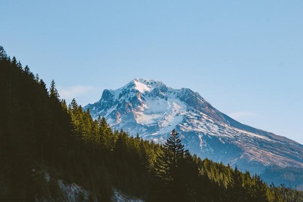 Wald auf einem hügel mit einem berg im schnee unter sonnenlicht bedeckt