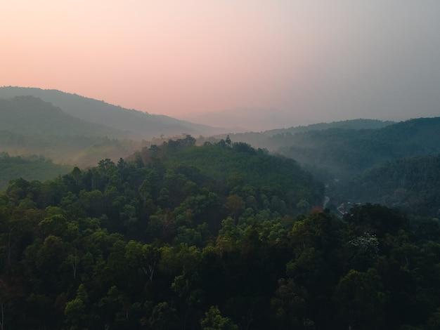 Wald, bäume und grüne straßen in der abendlandschaft von oben