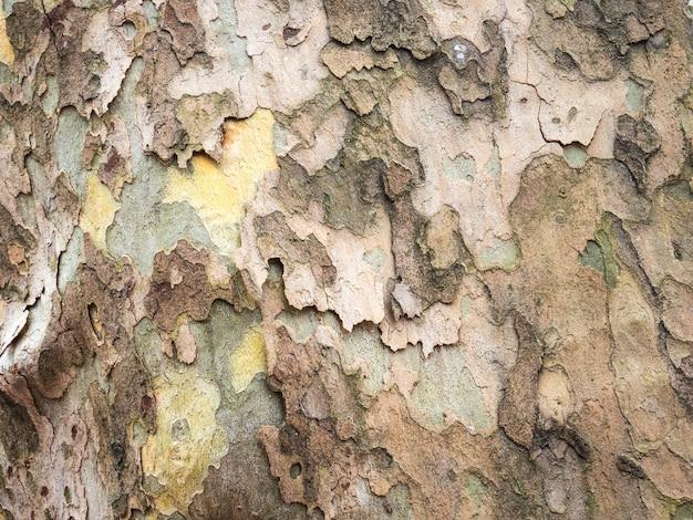 Wald-baum-beschaffenheit