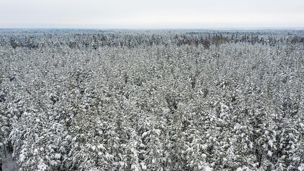 Wald bedeckt mit schnee von oben, luftbild-drohnenansicht der winterlandschaft