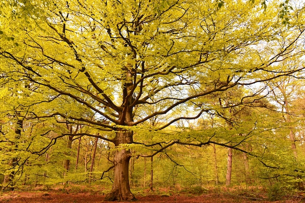 Wald bedeckt von bäumen mit bunten blättern im sonnenlicht im herbst