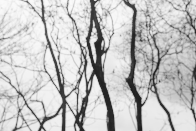 Wald blass wachstumsbranchen dunkel