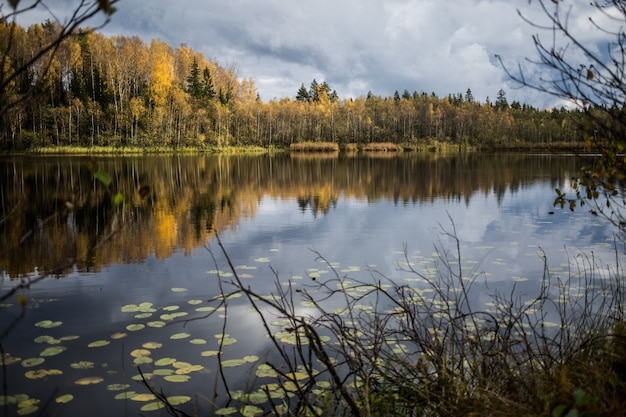 Wald der gelben herbstbäume, die im ruhigen see sich reflektieren