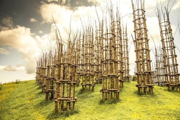 Wald der jungen bäume