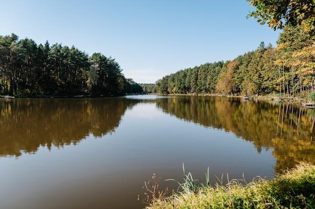 Wald, gras, bäume vor dem hintergrund von seen und natur. angelhintergrund. karpfen, hechtangeln. natur. wilde gebiete. der fluss.
