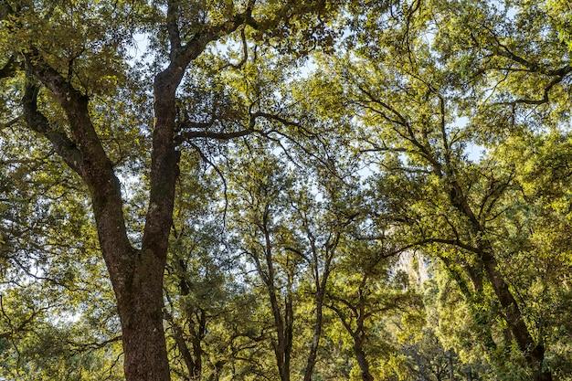 Wald im naturpark des