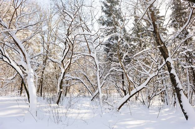 Wald im verschneiten winter