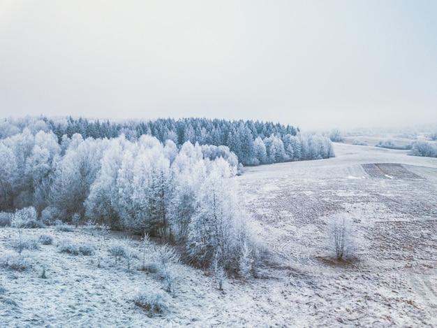 Wald im winter, gefrorene bäume