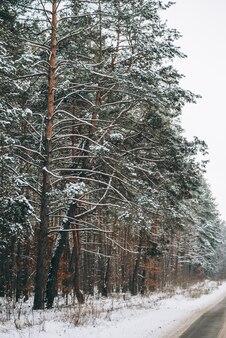 Wald im winter mit malerischer straße durch