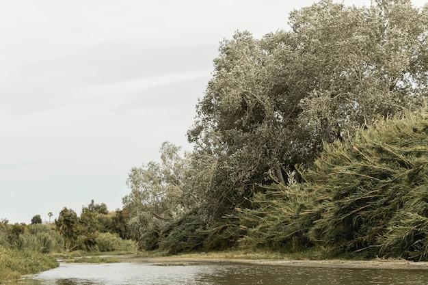 Wald in der nähe einer flusslandschaft