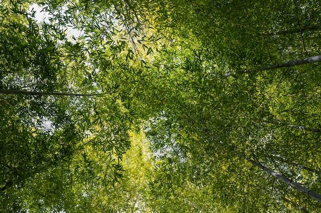 Wald mit bäumen in der nähe