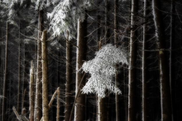 Wald mit blattlosen bäumen, die mit schnee bedeckt sind