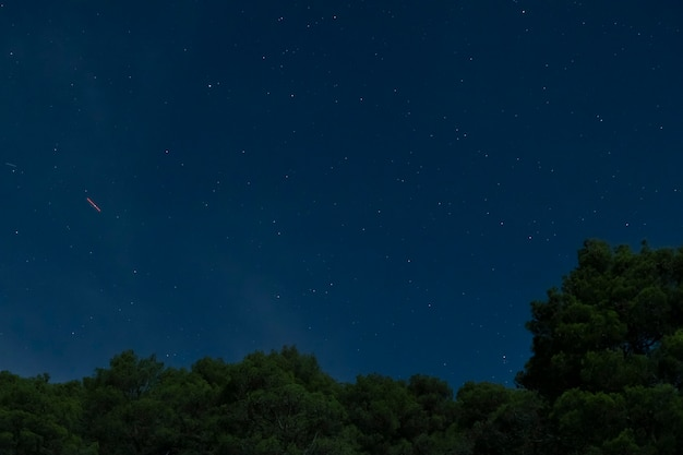 Wald mit blauem nächtlichem himmel