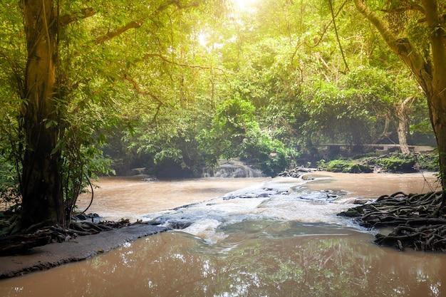 Wald mit gehwegen und fluss