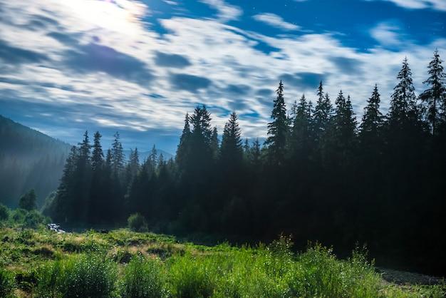 Wald mit kiefern in der mondnacht mit wolken
