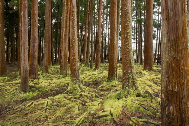 Wald mit moos bedeckt