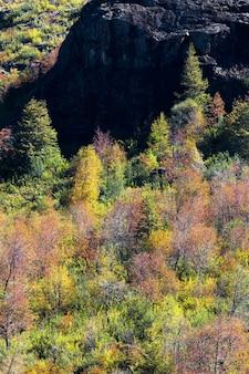 Wald mit rotgelben und grünen bäumen im herbst