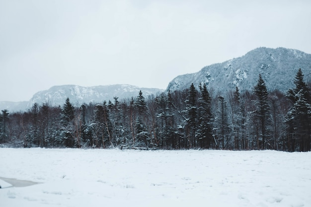 Wald mit schnee bedeckt