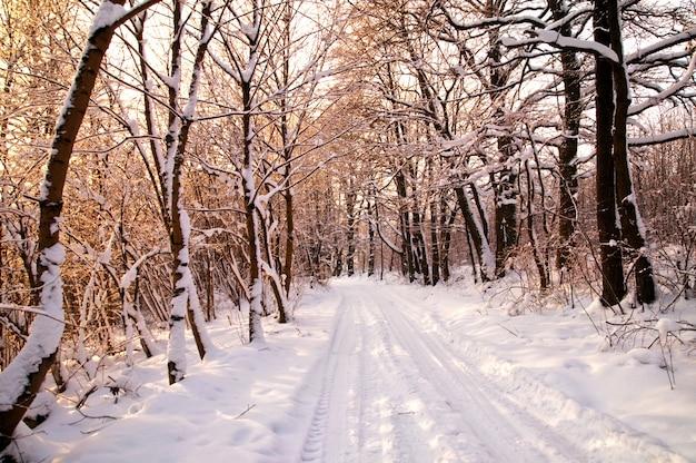 Wald mit schneebedeckten bäumen