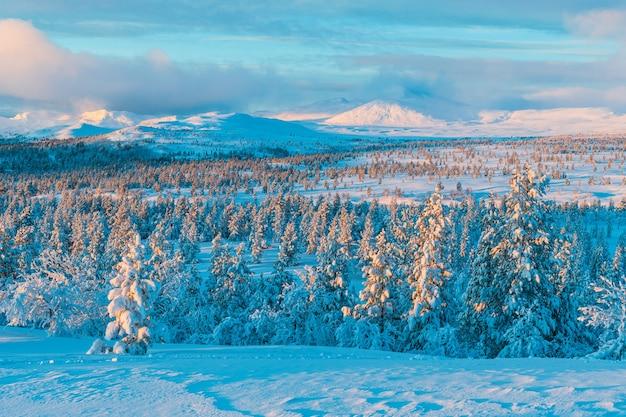 Wald mit schneebedeckten kiefern