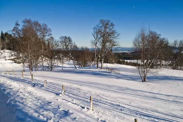 Wald norwegen straßenweg see