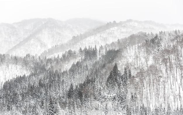Wald schneefall