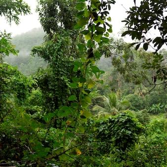 Wald, thailand