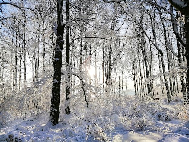 Wald umgeben von bäumen, die im schnee unter dem sonnenlicht in larvik in norwegen bedeckt sind