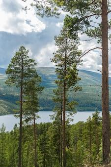 Wald und berge im rondane-nationalpark, norwegen
