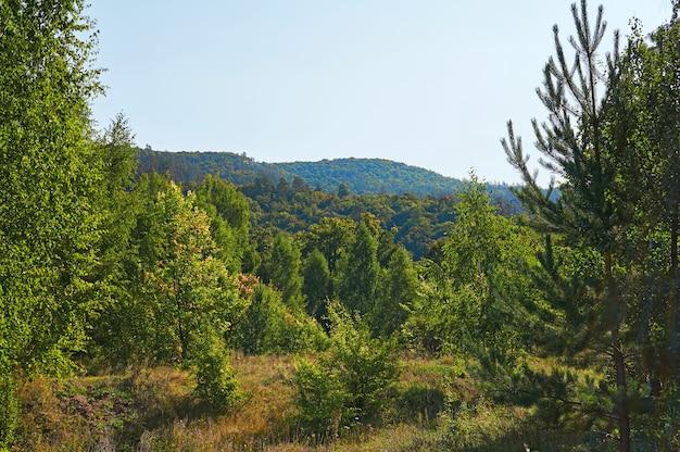 Wald und berge mit blauem himmel. waldschutzgebiet.