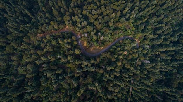 Wald und straße, luftaufnahme