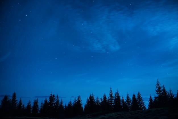 Wald von kiefern unter blauem dunklem nachthimmel mit vielen sternen. raumhintergrund