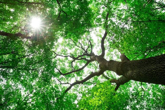 Waldbäume. natur grün holz sonnenlicht hintergründe