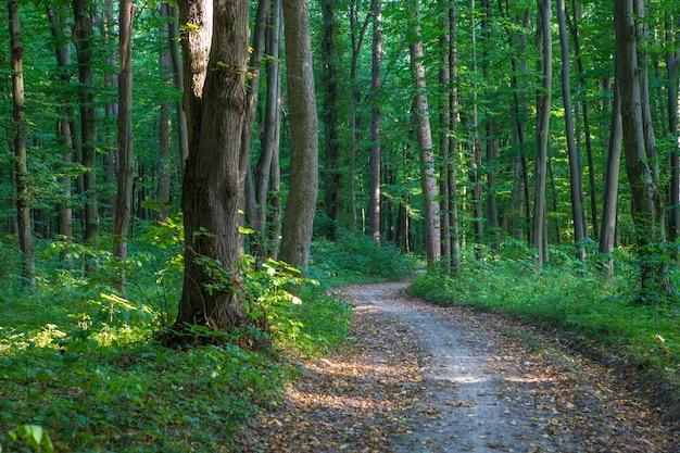 Waldbäume. natur grün holz sonnenlicht s