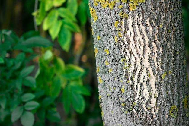 Waldbäume. natur. grüner holziger sonniger hintergrund.