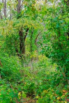 Waldbäume. natur grünes holz sonnenlicht hintergründe.