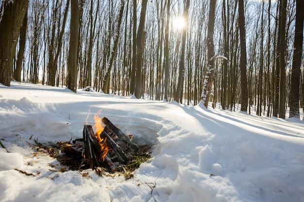 Waldbäume. natur schnee holz hintergründe. winter frühling