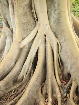 Waldbaum mit wurzeln