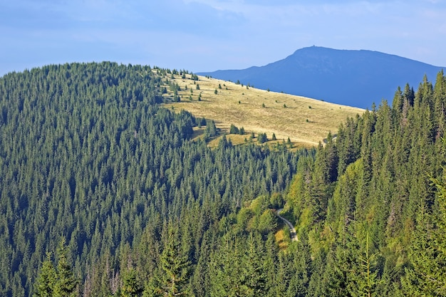 Waldberghang. karpaten. ukraine