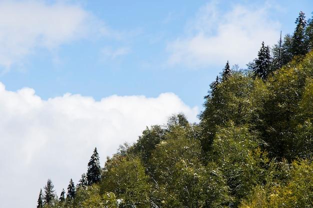 Waldblick und landschaft und blauer bewölkter himmel in georgia