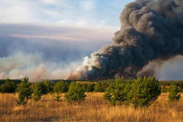 Waldbrand naturkatastrophe brennender wald