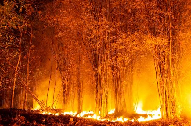 Waldbrand, wildfire.