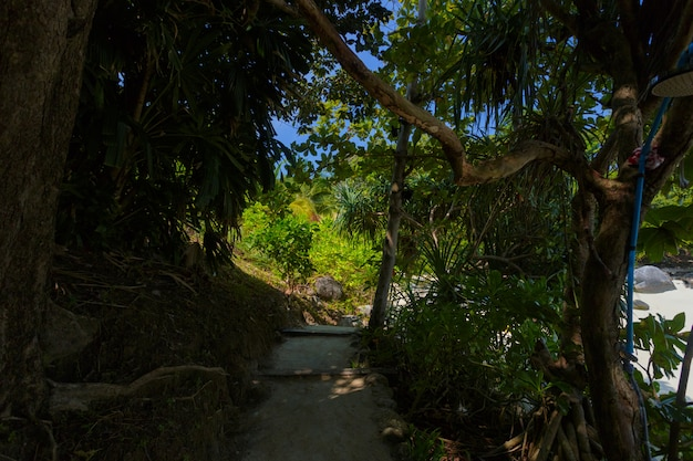 Waldfeld und -baum der grünen parks