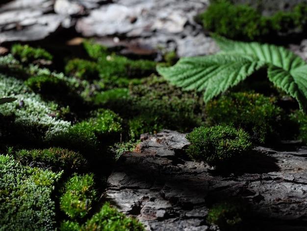 Waldhintergrund, moos und baumrinde. feder. grüner hintergrund.