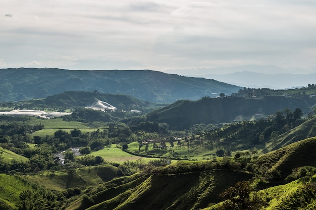 Waldkaffeefarm kolumbien manizales grün
